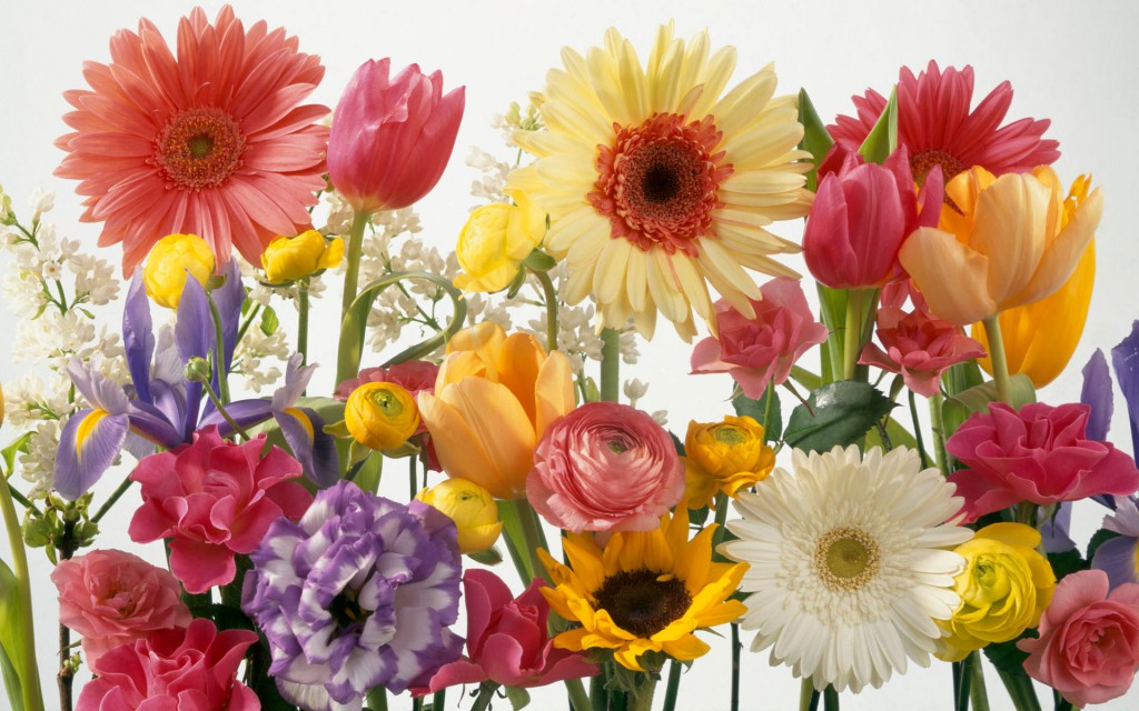 springtime_arrangement-wide