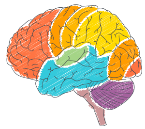 5 Ways Teaching About Neuroplasticity Improves Grades